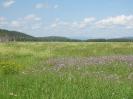 Долина реки Блудной возле Шара-Горхона. Вид на север