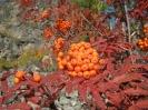 Дары природы - съедобные ягоды нашего региона