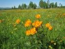 Цветы летние