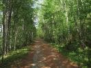 Кроны деревьев порою смыкаются над трактом