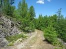 Выход из лесного пояса к россыпям. Высота около 1250 м